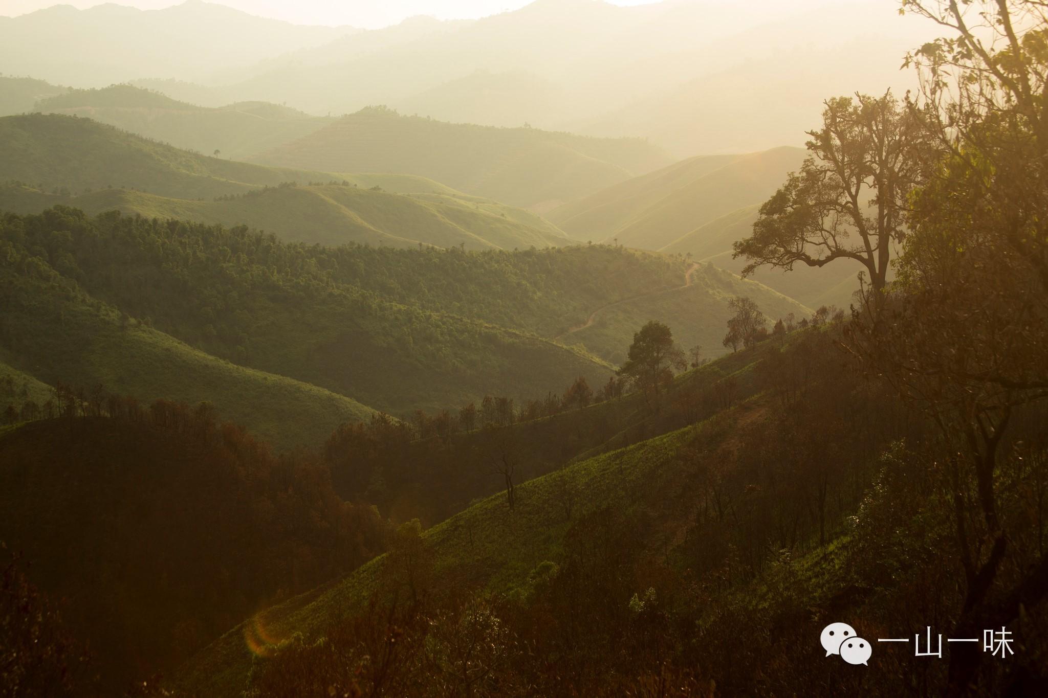 普洱国家森林公园鹿