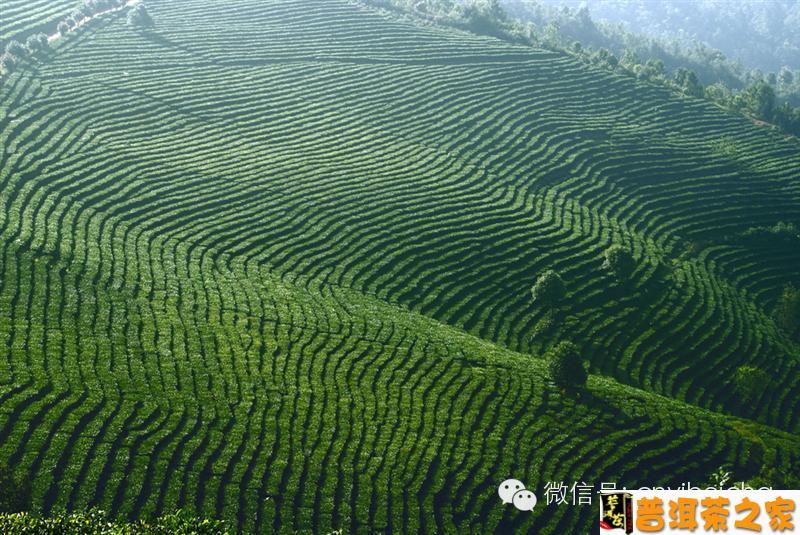 普洱茶图片 【一杯茶·感悟】你对普洱茶了解多少?